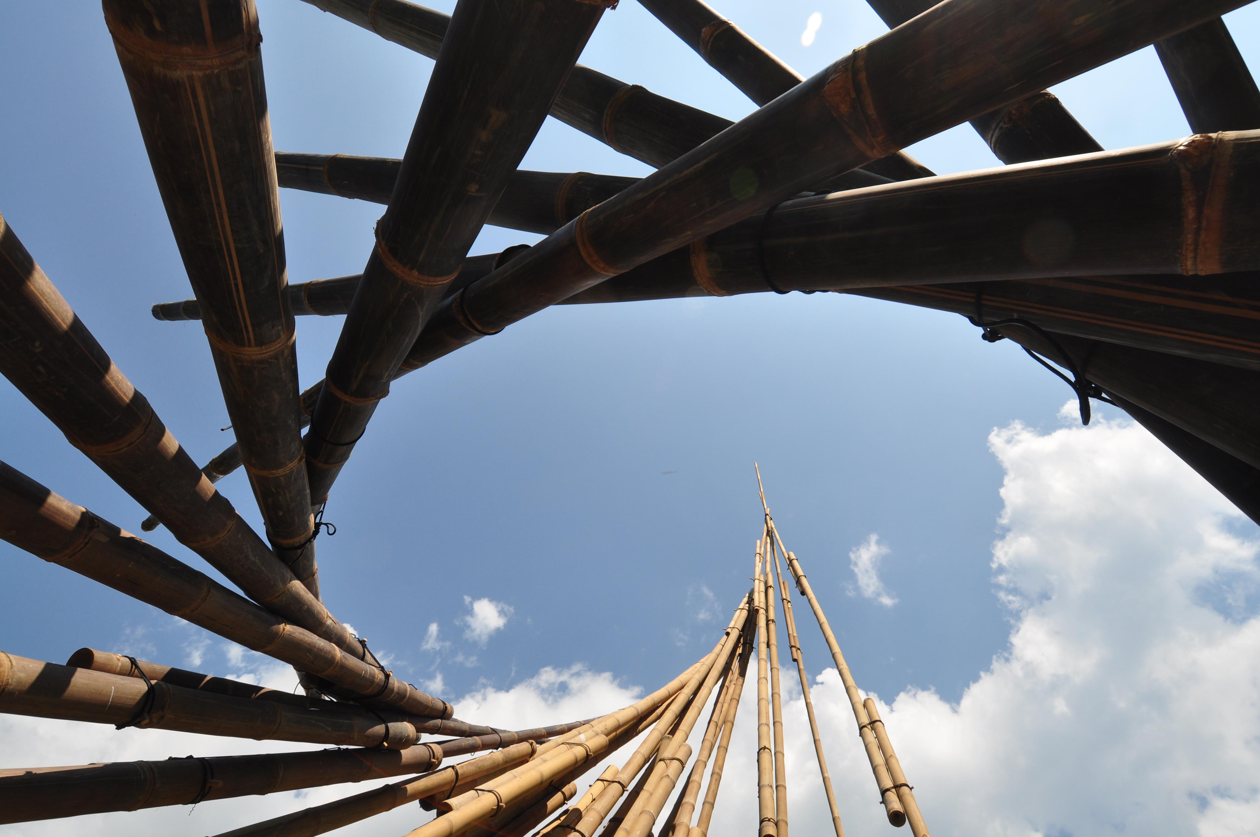 NAT012 bamboo19